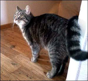 Katt hos Jörgen hemsidan